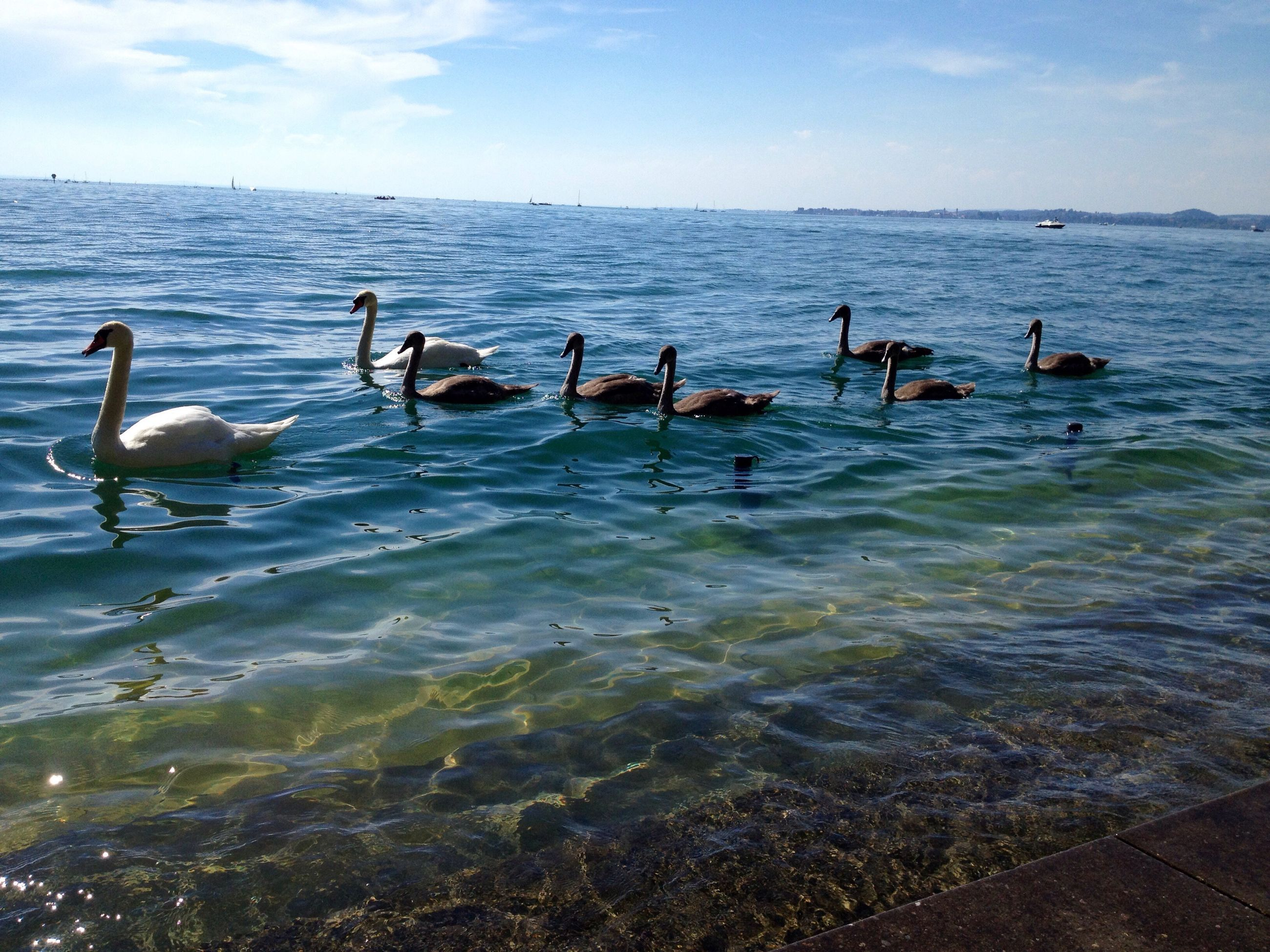 bird, water, animal themes, animals in the wild, large group of animals, sea, sky, animal wildlife, nature, beauty in nature, outdoors, swimming, flock of birds, day, water bird, scenics, no people, canada goose, perching