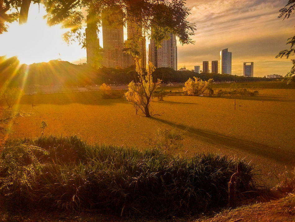 City Cityscape Buenosaires Argentina Otoño Otoño 🍁 Autumn Autumn Colors Sky And Clouds Yellow Grass Nature Motorola Cellphone Photography Urban Skyline No People Outdoors Cityscape City Sun Travel Warm Orange Color Travel Photography