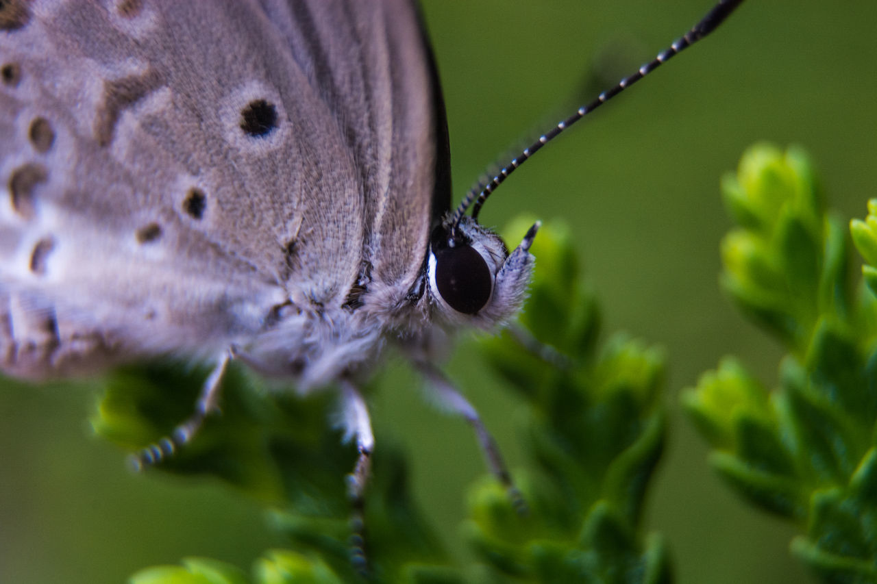 Macro Shot Of Butterfly On Plant