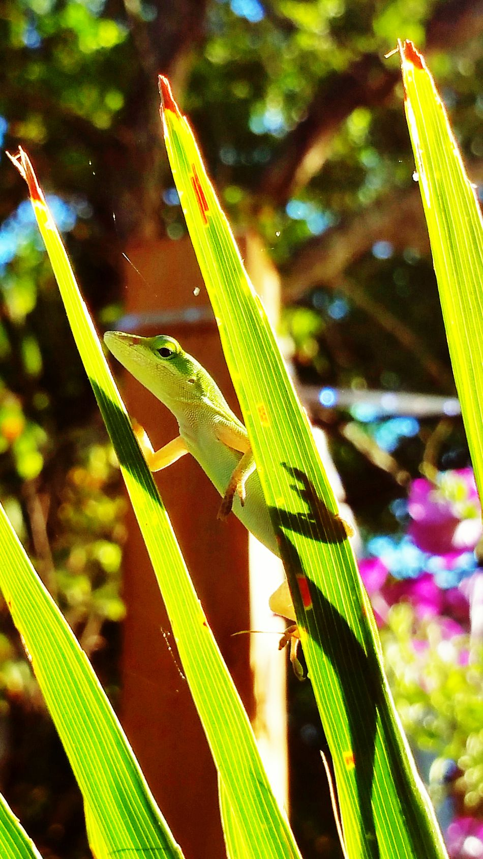 I see you watching me Lizard Taking Photos Check This Out Eye4photography  Out My Front Door Malephotographerofthemonth Tadaa Community Frontporch From My Point Of View Good Morning