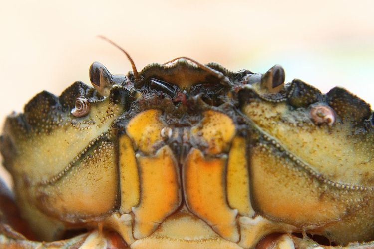 EyeEm Selects Animal Wildlife Animals In The Wild Nature Looking At Camera Underwater Sea Life Crab Crab Eyes Crab Eye Barnicles Crabbie Crabbing Shell Shellfish Photography SHELLFISH  English Beach Rock Pools Rock Pooling Rock Pool
