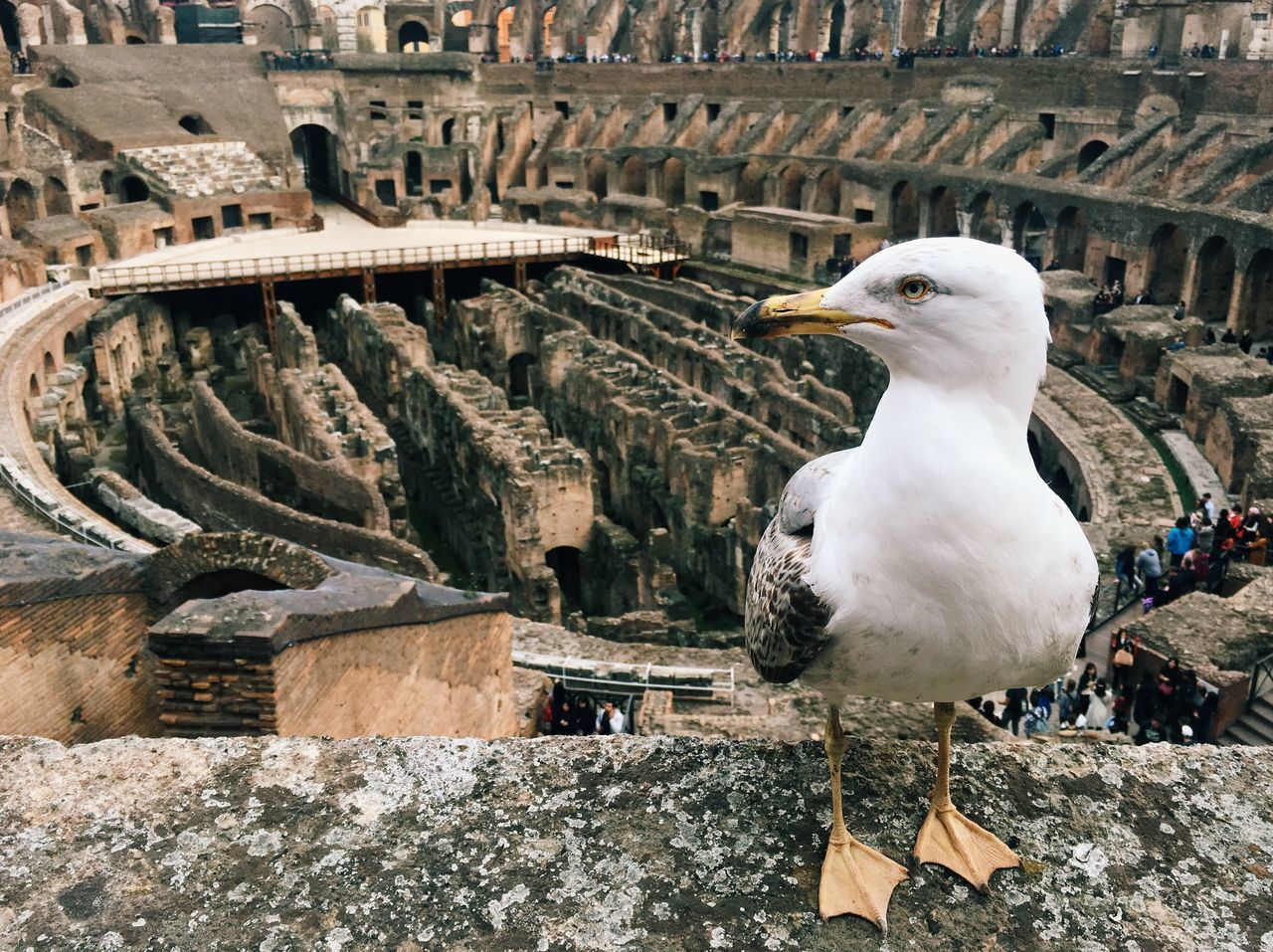 Colosseo Italy Travel Travel Destinations History Seagull Monument Traveling Bird Rome One Animal Outdoors Architecture Tourism Getting Inspired