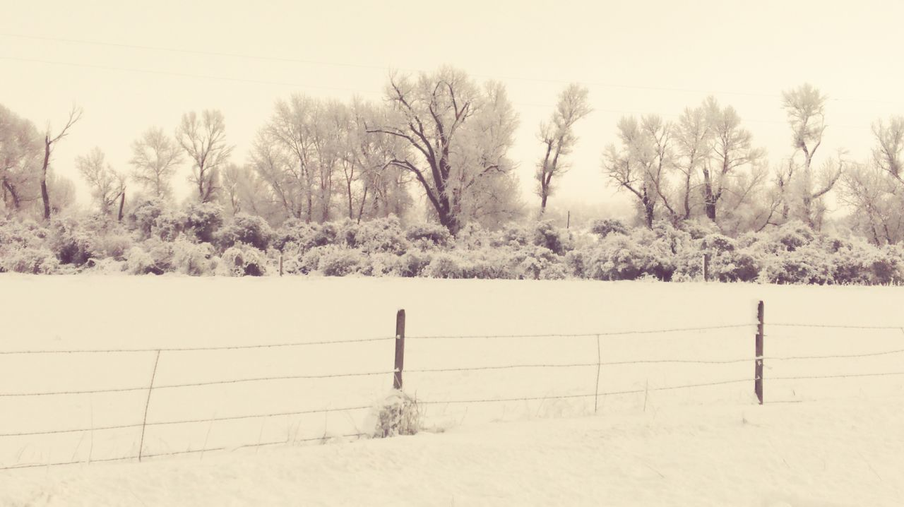 Fence And Trees On Snowy Field