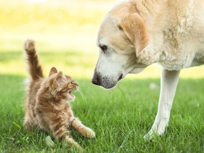 Animal Animal Head  Animal Themes Animals Cat Cats Vs Dogs Curiosity Dog My Cat Scared Pets Two Animals