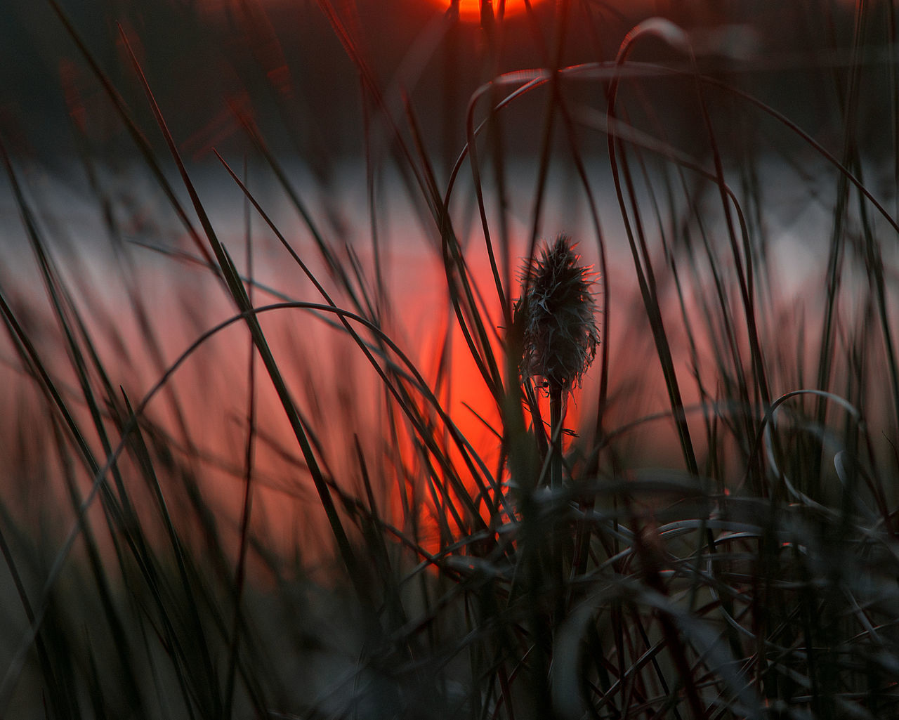 red sunset reflection in lake water Abstract Art Background Beauty In Nature Close-up Concepts Exceptional Photographs Grass Growth Lake Macro Art Melancholy Miscellaneous  Nature Nostalgia Other Outdoors Photo Art Plant Red Reflection Sun Sunrise Sunset Sunset Collection Water The Great Outdoors - 2017 EyeEm Awards