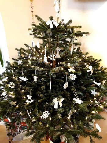 Merry Christmas 🎄🎄 Christmas Decoration Christmas Tree Christmas Lights Flower Nature Growth No People Day Plant Outdoors Tree Close-up