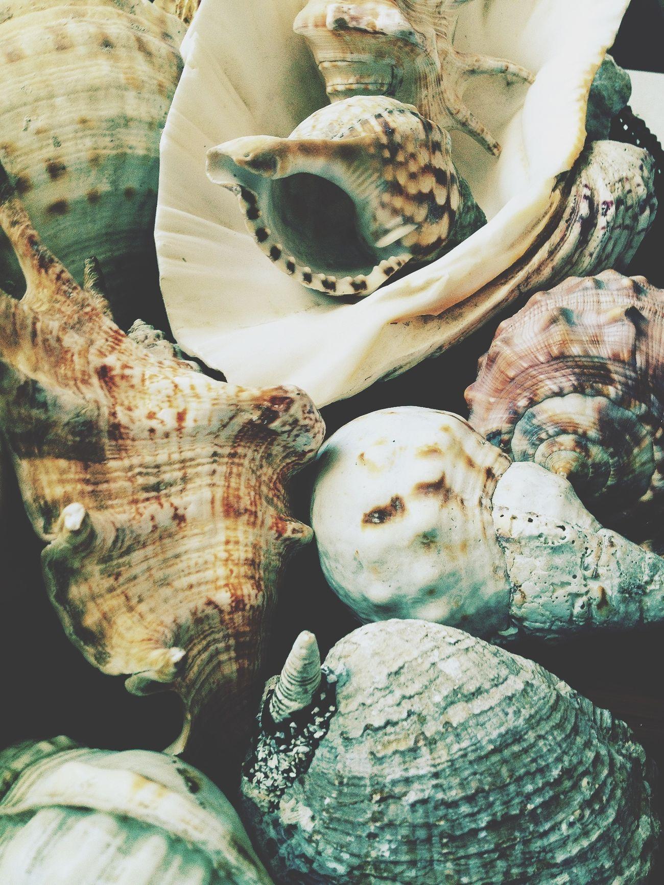 Summertime Caracola Shells Mediterràniament