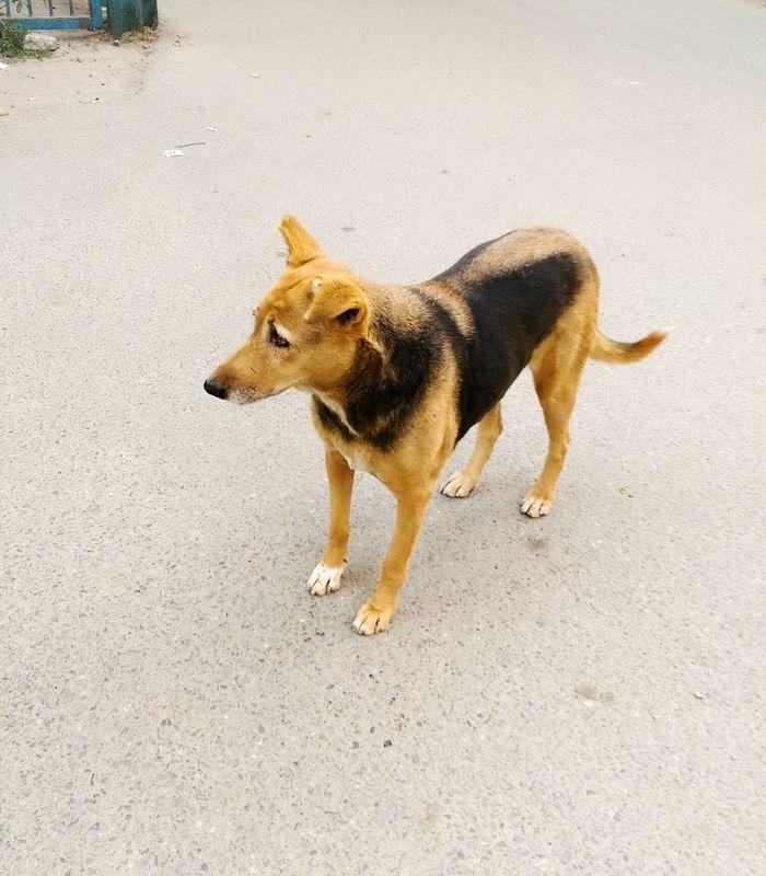 Dogstagram Dog❤ Dog Love Streetdogs Innocent Face EyeEm Best Edits Eye4photography  EyeEm Gallery EyeEmBestPics EyeEm Best Shots