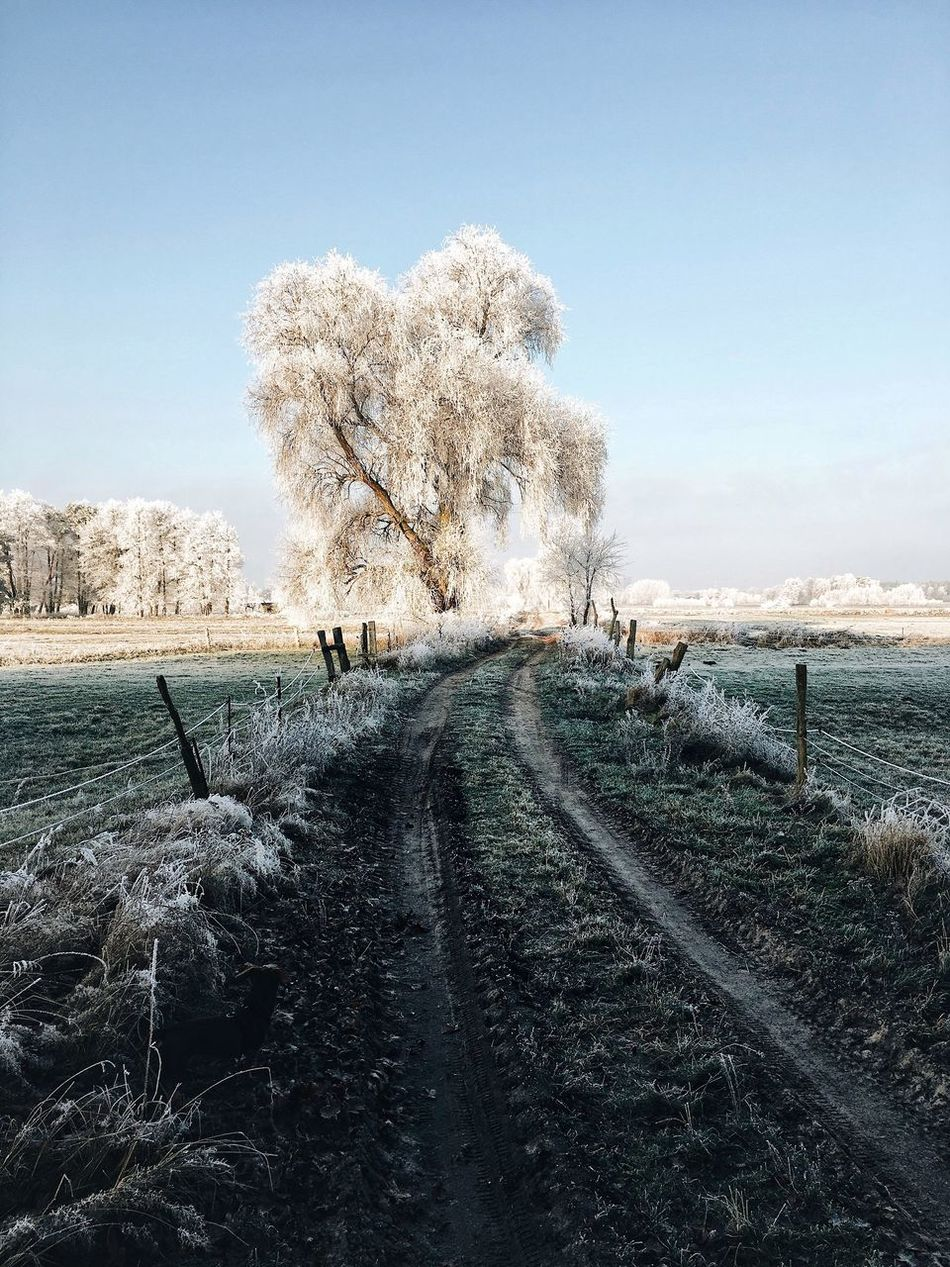 - Parforceheide - Nature Day Sky Outdoors Tree Clear Sky Tranquility Beauty In Nature No People Landscape Scenics Cold Temperature Cold Cold Days Winter Wintertime Nature Brandenburg Outdoor EyeEm Nature Lover Beauty In Nature Idyllic Clear Sky Tree Countryside