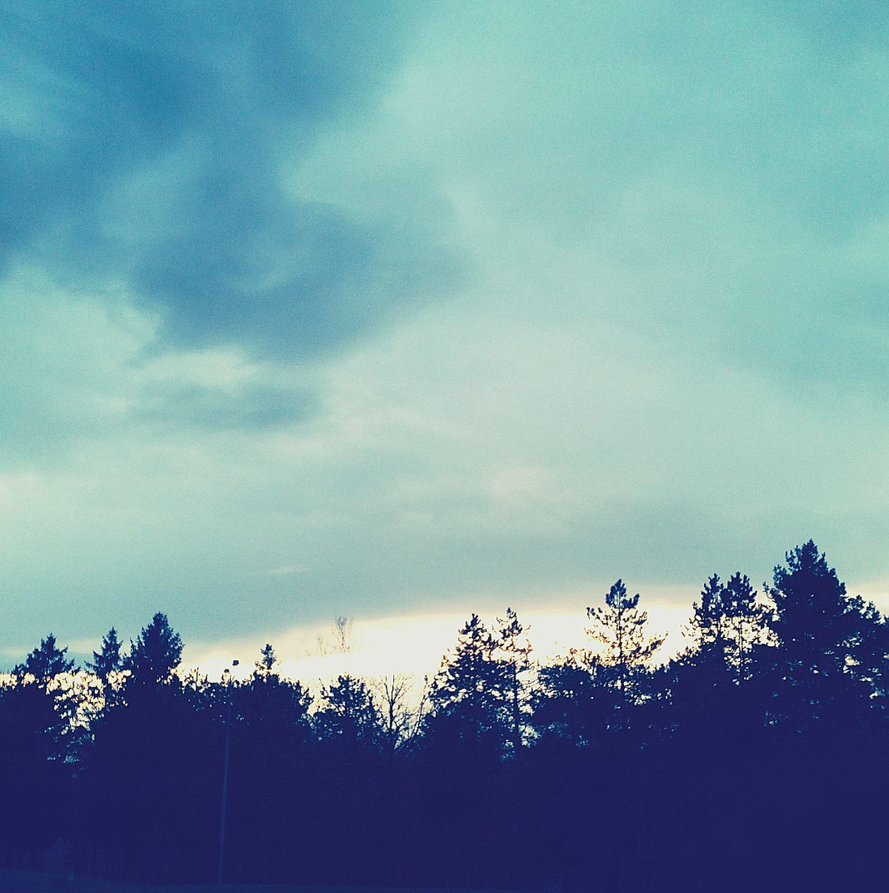 tree, sky, nature, no people, low angle view, beauty in nature, day, outdoors, scenics