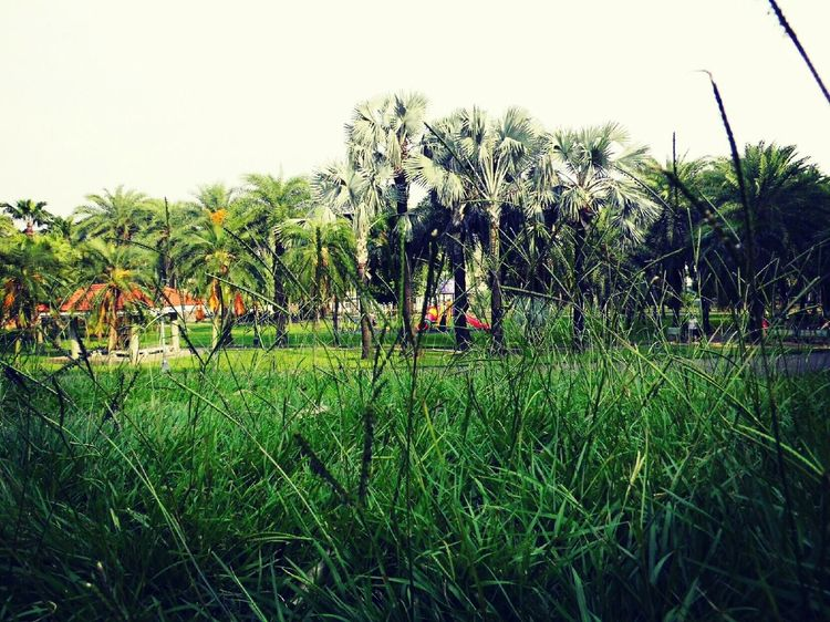 Take a walk in the park. -Photography by Abu -