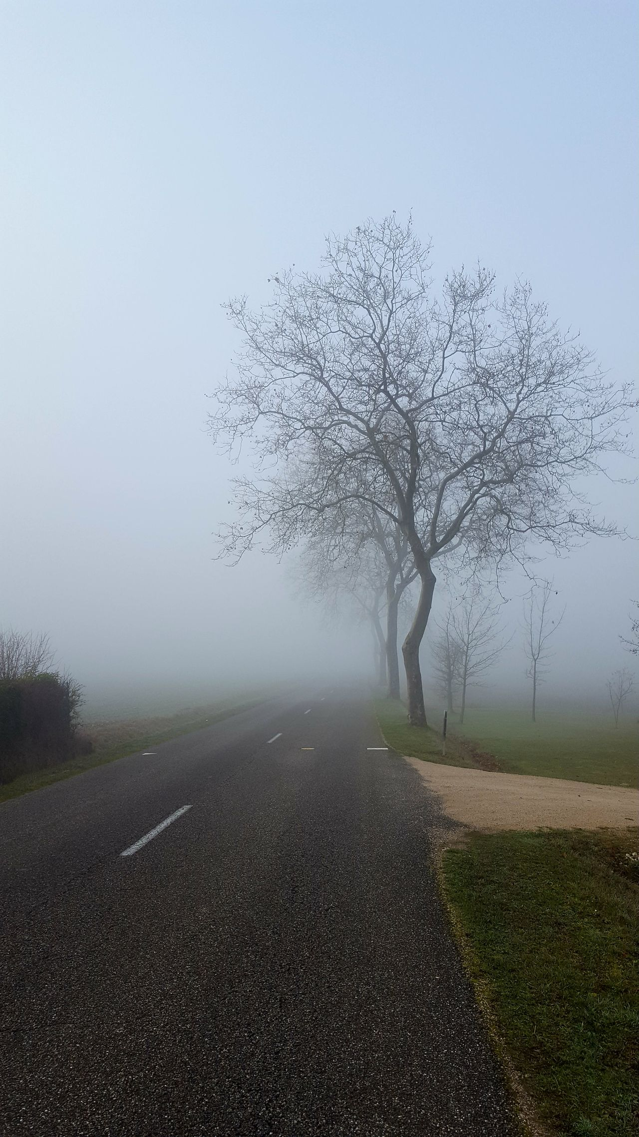 Road To Nowhere Fog Nature Tree Rain Day Beauty In Nature Outdoors Sky No People Water Focus On Foreground My Point Of View Galaxys6 Crossroads The Week On EyeEem
