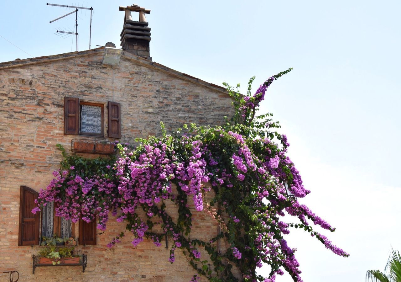 Flowers Blooming On House