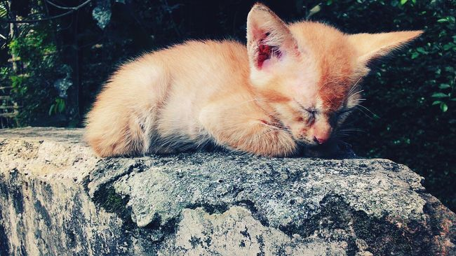My Cats Sleepingbeauty Expression Photo Editing Landscape By EyeEm