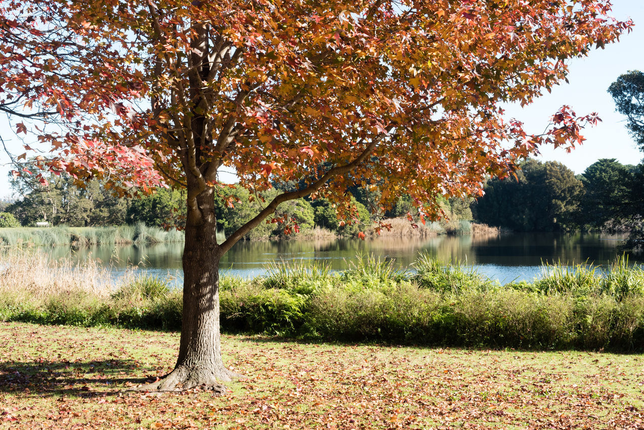 Autumn tree in park Autumn Beauty In Nature Branch Change Day Grass Growth Lake Landscape Leaf Nature No People Outdoors Scenics Sky Tranquil Scene Tranquility Travel Destinations Tree Water