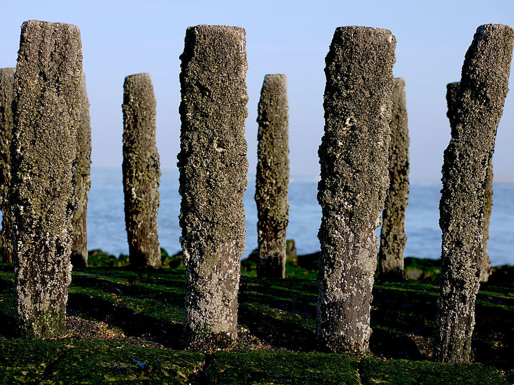Posts on the groyne at the north sea in Zeeland, the Netherlands Art And Craft Beach Posts Clear Clear Sky Coast Creativity Grass Green And Blue Groyne Holland Ocean Shores Posts Retro Rock Rock - Object Rock Formation Sculpture Shore Standing Statue Stone Sunny Winter The Groyne The Netherlands Vintage