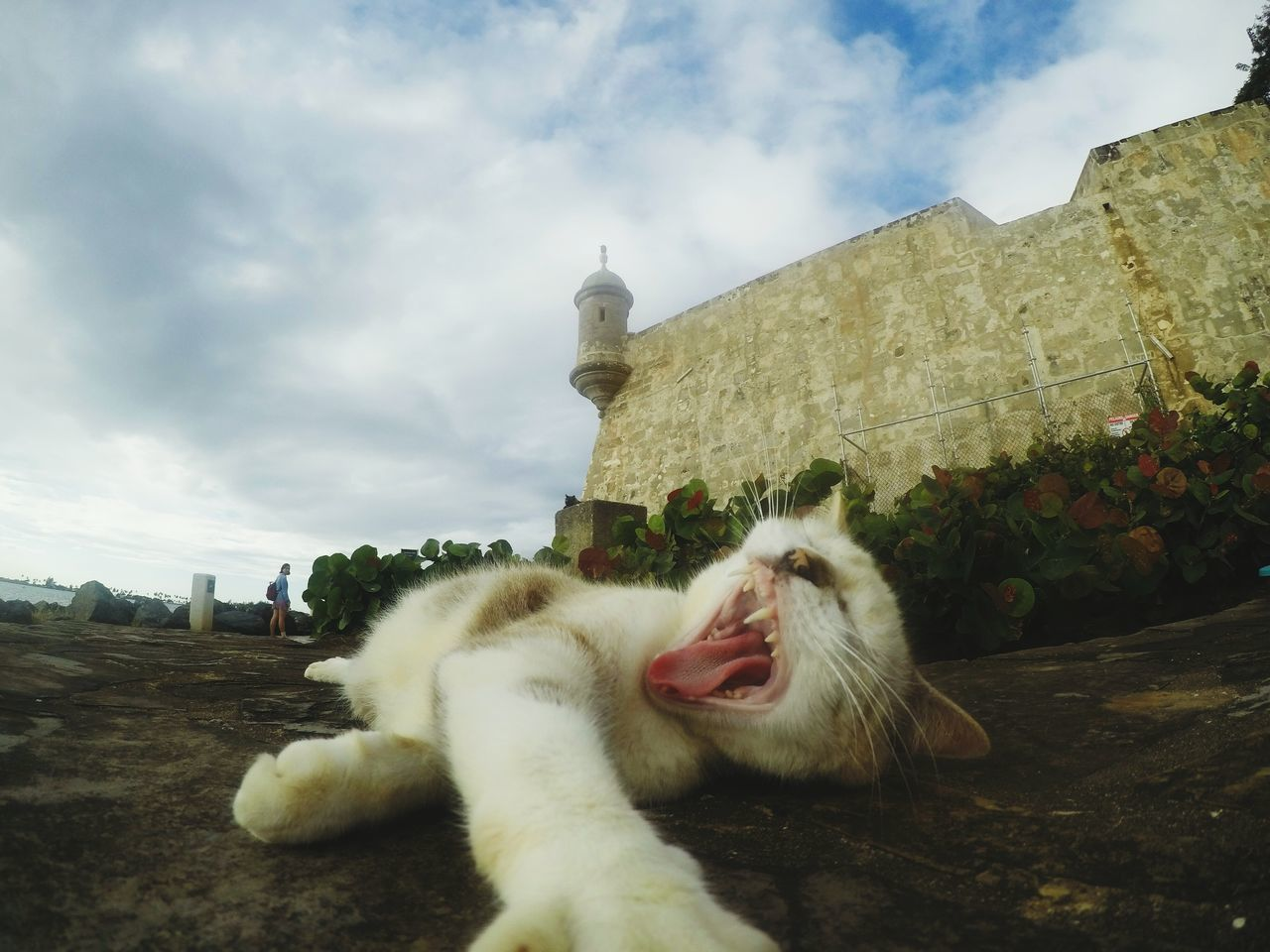 Cloud - Sky Sky Outdoors Architecture Cat Cats Selfiecat Selfie Cat Selfıe Selfie Animals Animal Animals Animal Wildlife Animal Photography Cat Eyes Cat Watching EyeEmNewHere