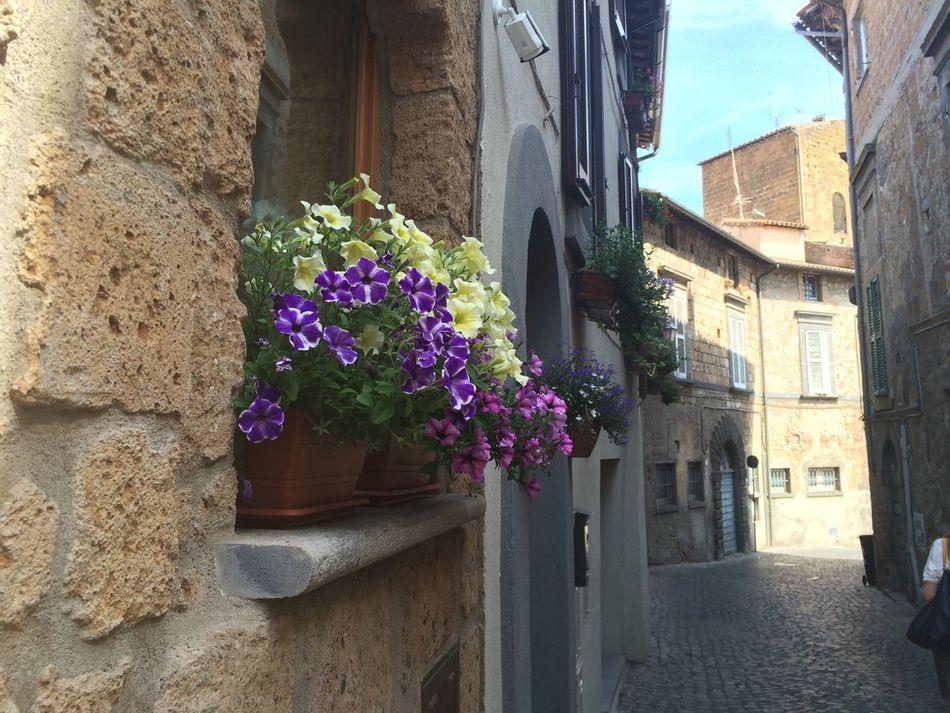 Vicoli Orvieto Passeggiata Friends Senza Pensieri Flowers Beautiful Viaggio...