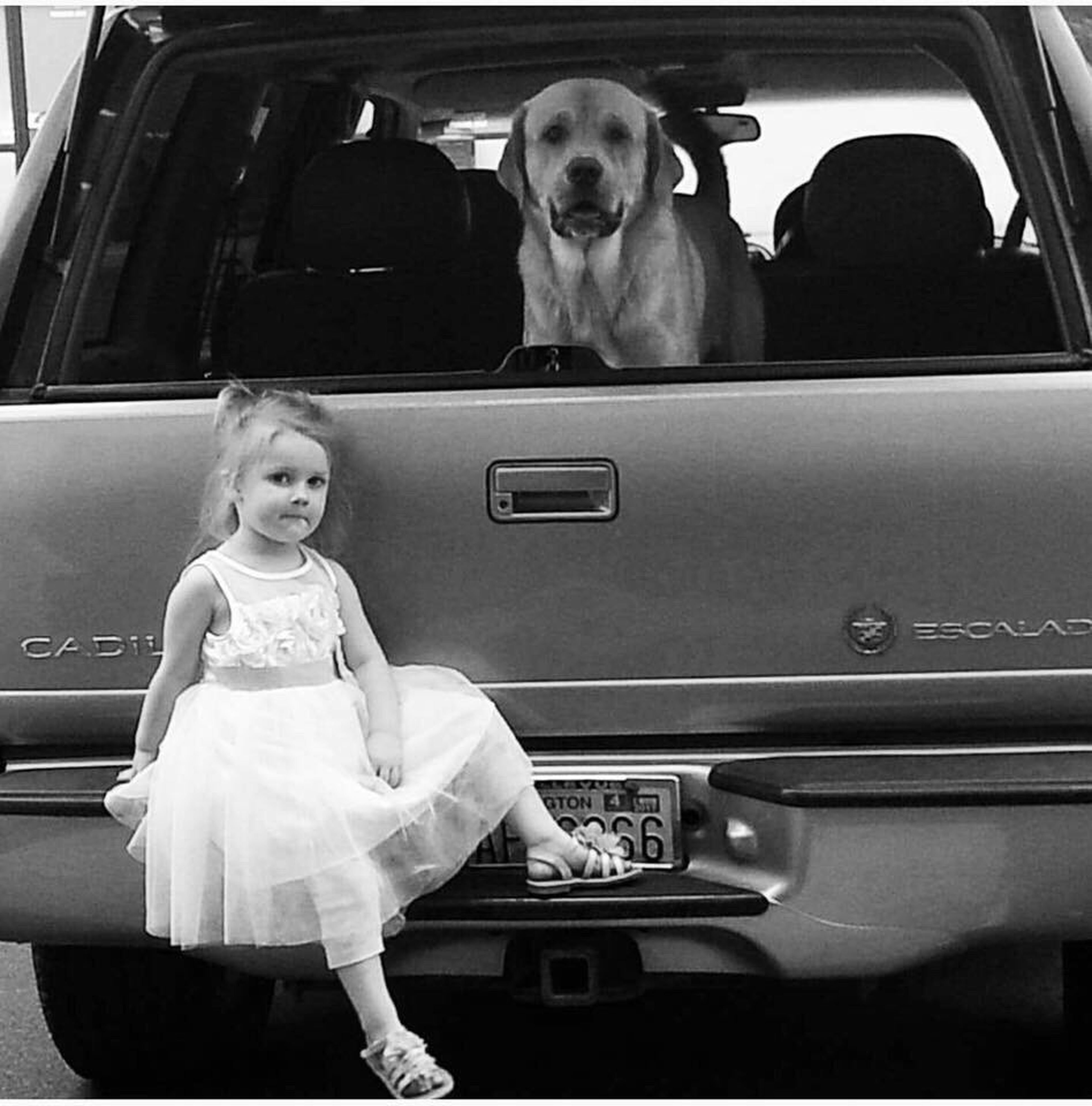 EyeEmNewHere Beauty And The Beast Zues Black And White Photography So Serious Family Real People Beauty Pet Portraits Real Life Awesome_shots Little Girl Sweet Face Looking At Camera Childhood New To Photography Puppy Love Seriousface Big Dog Her Protector Black And White The Week On EyeEm