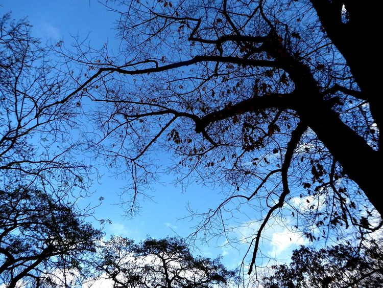 Blue Sky Again😍😎 Silhouette_collection Silhoutte Photography Silhouettes Of Trees Beauty In Nature Tranquility For My Friends 😍😘🎁 Enjoying Life Celebrate The Moment Enjoying The View Enjoy The Moment Celebrate The Little Things Beauty In November Beautiful View After Rain And Again And Again The Sun Rises