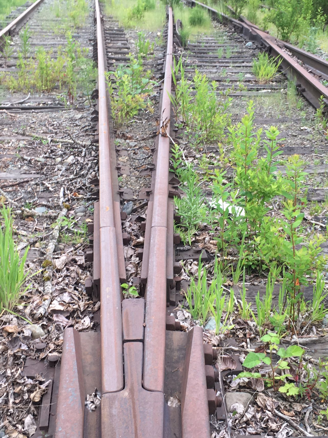 Train Tracks Day Outdoors Growth No People Nature Close-up Rust Iron Abandoned