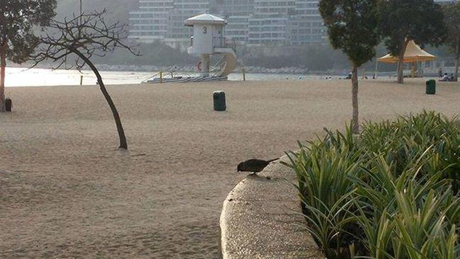 Relaxing at Repulsebay , HongKong with a little feathered friend. Bird Beach
