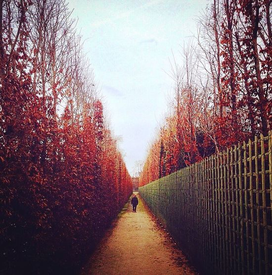 Achieve your goals // Park of Versailles, France France Photos IPhoneography IPod Touch Photography IPod Touch Garden Photography Lines, Shapes And Curves Travelingram Showcase February Versailles Gardens