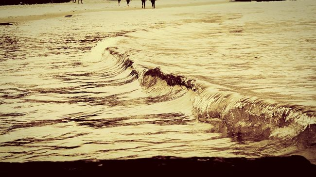 Little Wave Little Waves Nature Beach Water Sand Outdoors Beauty In Nature Close-up No People Sea Day Wave Beach Photography