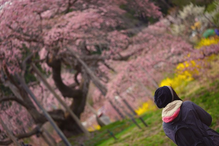 Capture The Moment Depth Of Field Sakura Springtime Focus On Foreground One Person People Beauty In Nature Snapshots Of Life Fantasy Nature Fine Art Fragility Selective Focus Cherry Blossoms Uzuki Of The Flower Scenics Landscapes Still Life Tranquility Full Frame Detail Sigma EyeEm Best Shots 17_04 The Secret Spaces EyeEmNewHere Art Is Everywhere TCPM
