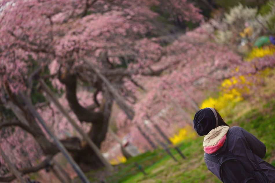 Capture The Moment Depth Of Field Sakura Springtime Focus On Foreground One Person People Beauty In Nature Snapshots Of Life Fantasy Nature Fine Art Fragility Selective Focus Cherry Blossoms Uzuki Of The Flower Scenics Landscapes Still Life Tranquility Full Frame Detail Sigma EyeEm Best Shots 17_04 The Secret Spaces EyeEmNewHere Art Is Everywhere