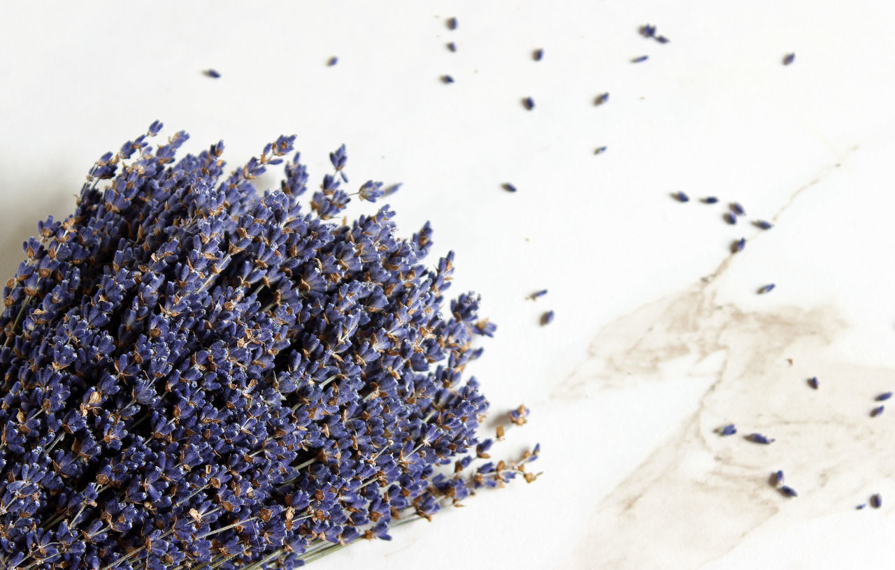 Lavender fields Aromatherapy Background Beauty In Nature Bunch Of Flowers Dried Herbs Fragrance Homeopathic Lavender Lavendula Medicinal Plant Nature No People Open Space Overlay Plant Purple Flowers Scent Spa Styled Template