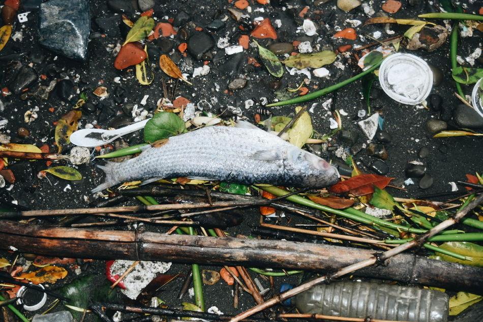 Dead Dead Fısh Death Sea Seaside Taipei Taipei,Taiwan