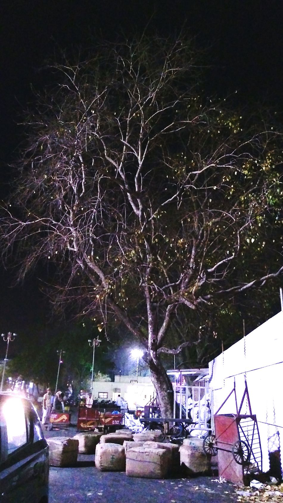 Night Outdoors Tree Sky Outside A Railway Station Outside Photography Illuminance Treescape Treetastic Treecollection Tree Branches Treees Nightshot Night Time Night Light