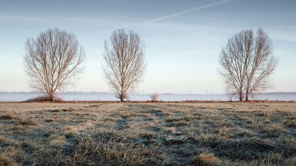 Three trees on a field in Brandenbzrg, Germany during a winter sunrise Beauty In Nature Brandenburg Clear Sky Close-up Day Foggy Sunrise German Landscape Germany Grass Group Of Three Group Of Trees Landscape Landscape In Brandenburg Misty Sunrise Nature No People Outdoors Philipp Dase Sky Sky And Clouds Sunrise On A Field Tree Tree Trunk Winter Landscape Winter Mood