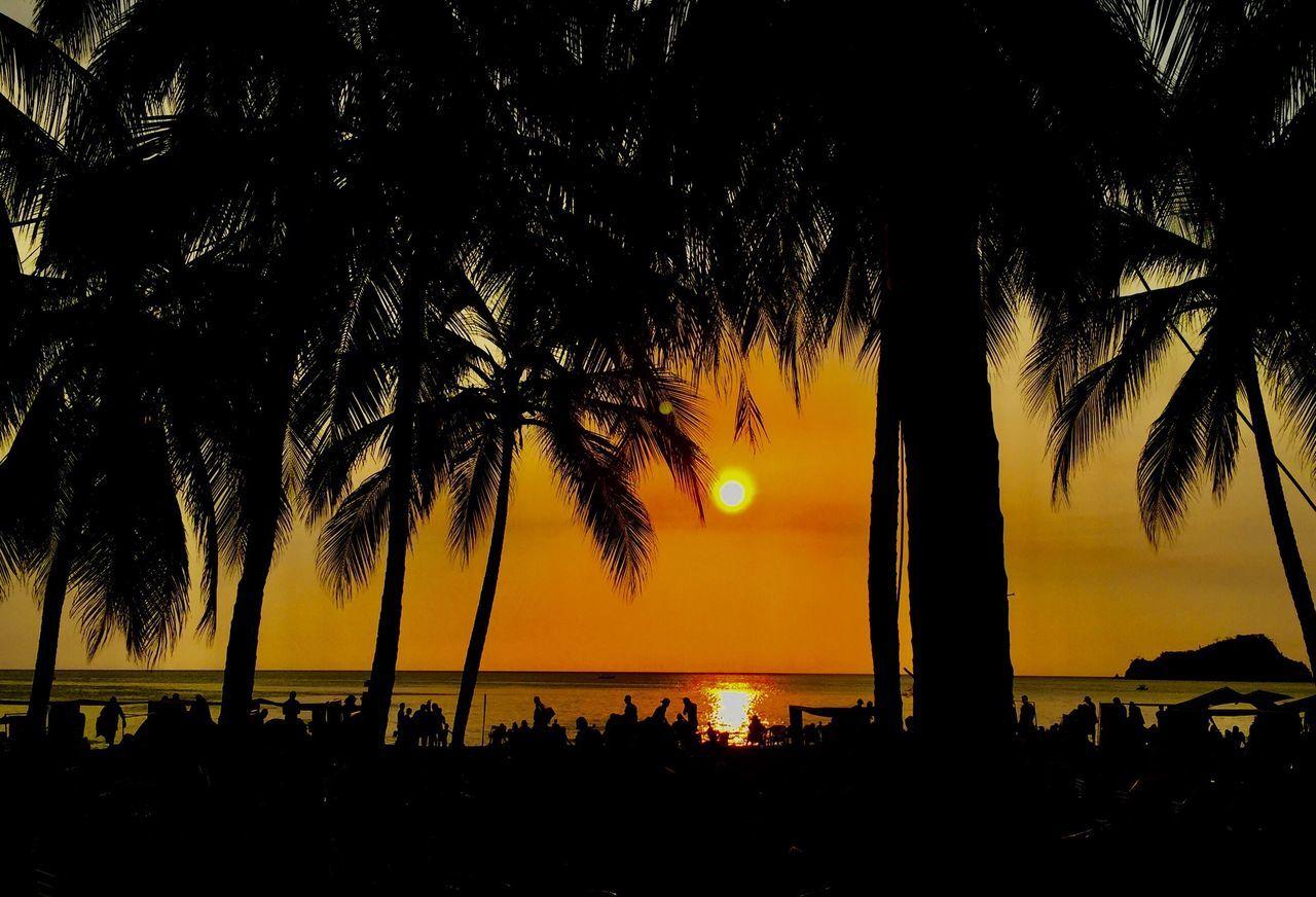 Palm Tree Vacations Beach Orange Color