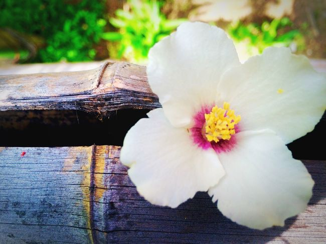 竹と花 Hello World Enjoying Life EyeEm Gallery Iphonegallery Japan Japanese  Nature Flower Oneflower What Name? This Flower Hope https://youtu.be/_ovdm2yX4MA Peace