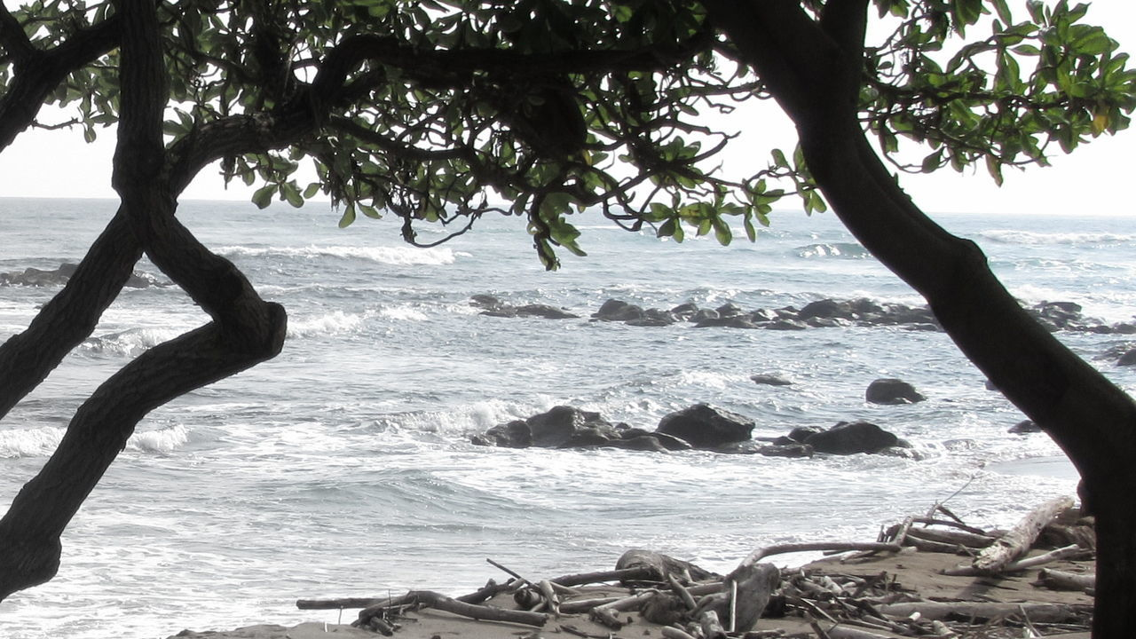 Sea Beach Tree Water Sand Nature Coastline Tranquility Horizon Over Water Beauty In Nature Sky Wave Day Kauai Hawaii Tree Driftwood