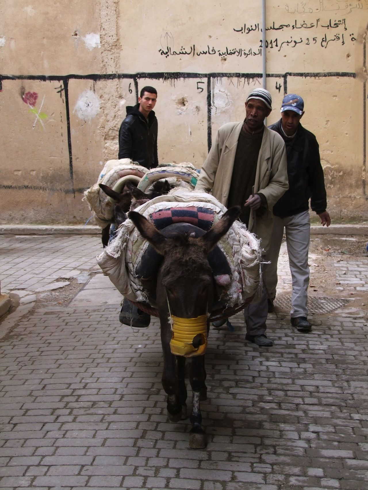 Working Donkeys, Medina City Composition Fes Full Frame Full Length Laden Making A Living Medina Medina De Fez Morocco Outdoor Photography Real People Sunlight And Shade Three Men Two Donkeys Standin Walking Working Animals Working Donkeys