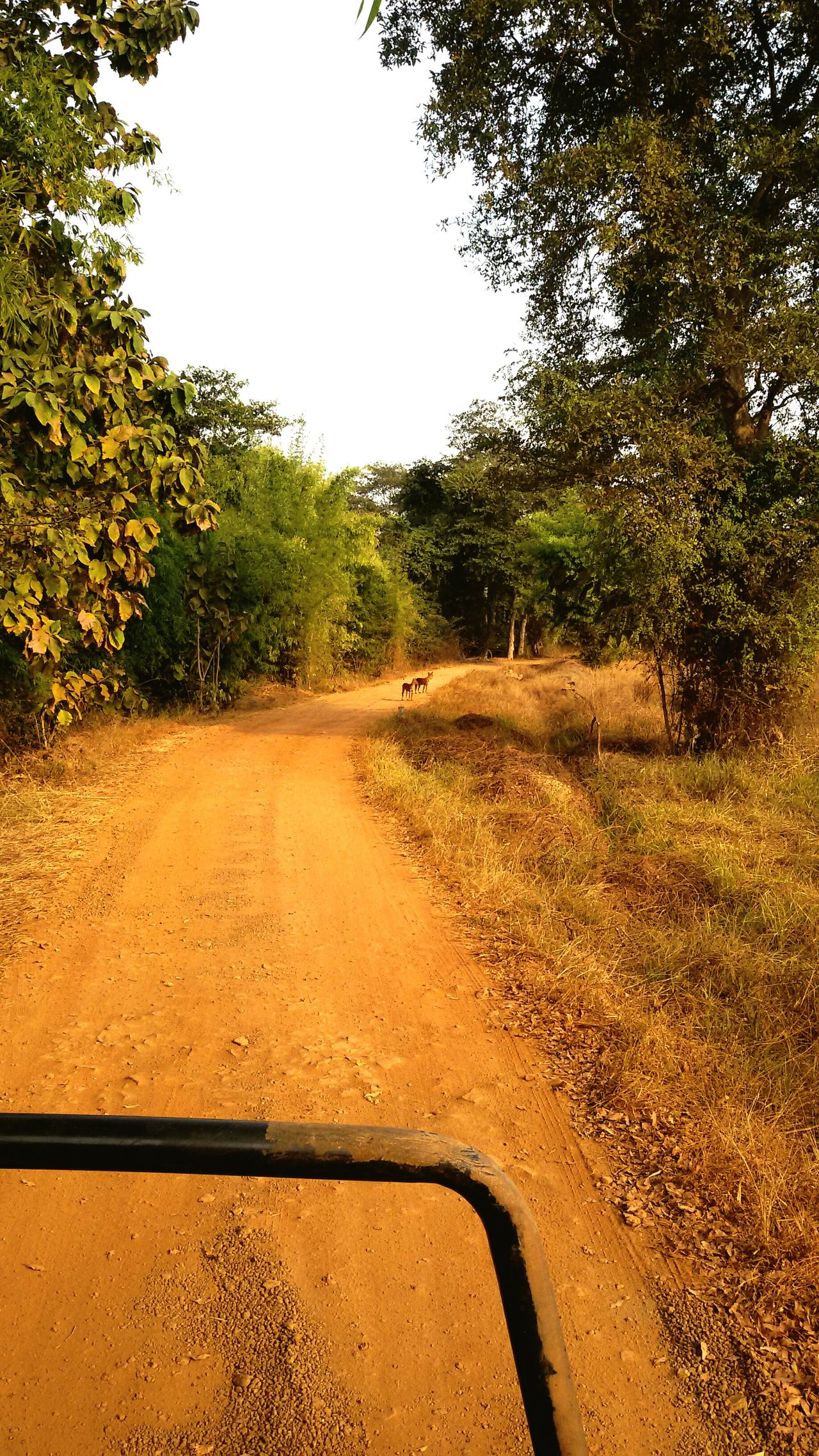 Nature Plant Dirt Road Clear Sky Tree Landscape Non-urban Scene Growth Road Junglefever Junglesafari Wildlife & Nature Wildlife Photography Wilddogs Transportation Tree Road Landscape Tranquil Scene Clear Sky Empty Mode Of Transport Tranquility Non-urban Scene Dirt Road