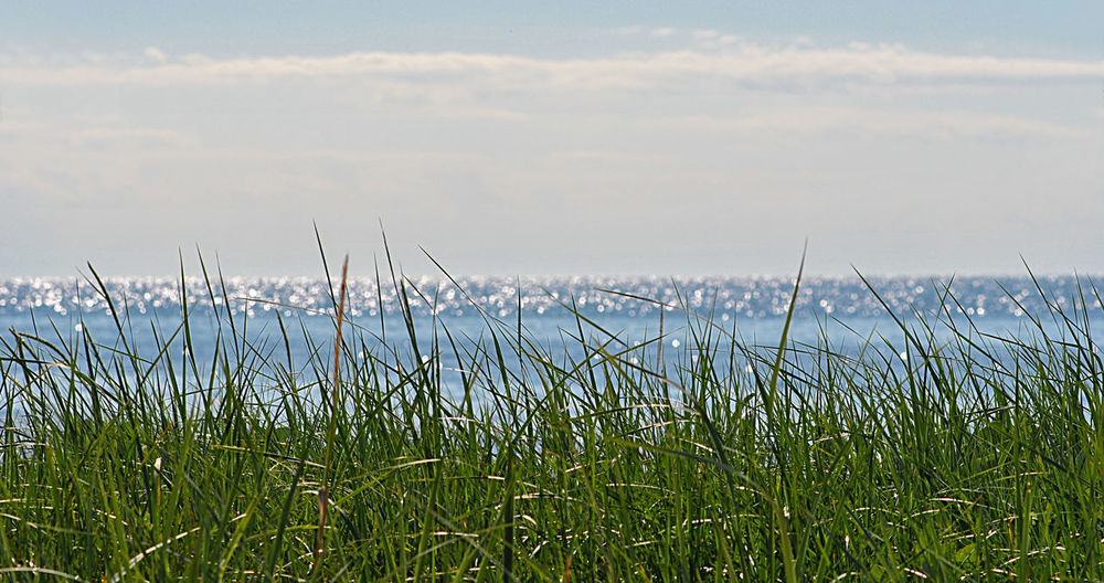 Aquatics Baltic Sea Blue Clouds Color Conceptual EyeEmNewHere Fantastic View Fibrillation Grass Green Light And Shadow Moment Nature Nature Collection Ocean Sea Sea Background Shade Shimmer Shimmering Sea Silver  Sky Water White Miles Away