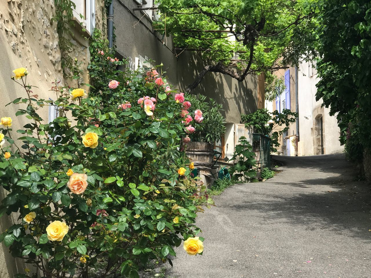 Village street Flower Plant Day Outdoors No People Growth Built Structure Building Exterior Architecture Nature Roses Flowers  Blossom Freshness Yellow