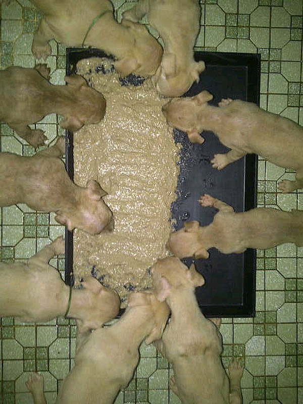 Nice eat..... Dog Lover's In Jakarta, Indonesia