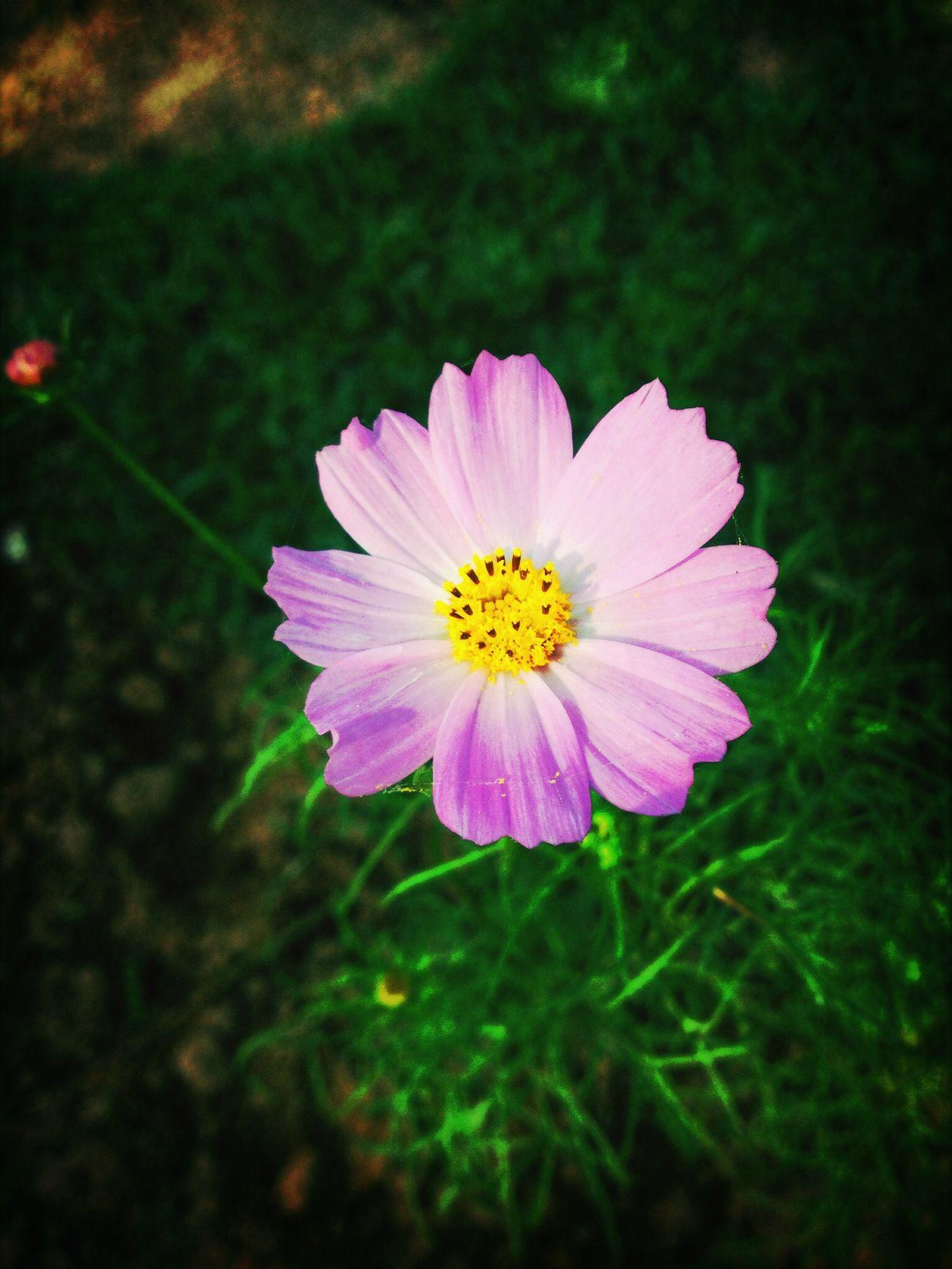 Hoa nắng