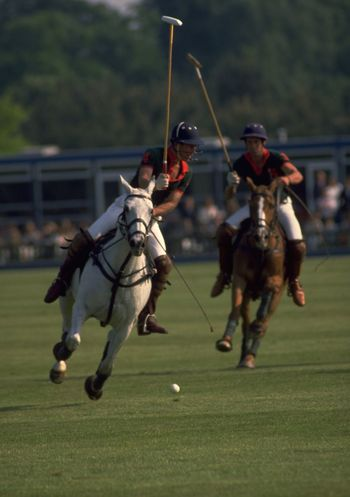 Prince Charles as a young man playing Polo on Smith's Lawn in Windsor Great Park. The Prince of Wales became interested in polo as a child, watching his father, The Duke of Edinburgh, play at Windsor. His Royal Highness played in all four positions, but usually at No 4 (back). Although Polo was played in ancient Persia, the modern game of polo is said to come from India, where the game was probably known as Pulu. Two British soldiers in India helped set-up the Calcutta Polo Club, in 1862. Military officers then imported the game to Britain and the British are subsequently credited with spreading polo worldwide in the late 19th and early 20th century. http://pics.travelnotes.org/ Archival Blurred Background British Canter competition Country Life England Focus On Foreground Great Park Horseback Riding Horses London Lifestyle People Polo Polo Mallets Prince Charles Prince Of Wales Real People Royal Family Royalty Sport Sports Helmet Sportsmen White Horse Windsor Great Park