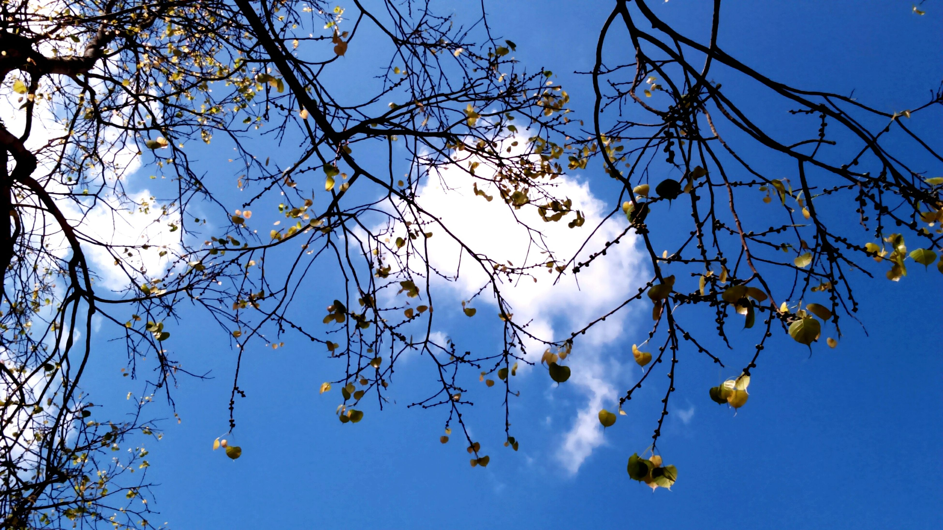 tree, low angle view, nature, branch, sky, no people, outdoors, growth, beauty in nature, day, tranquility, catkin