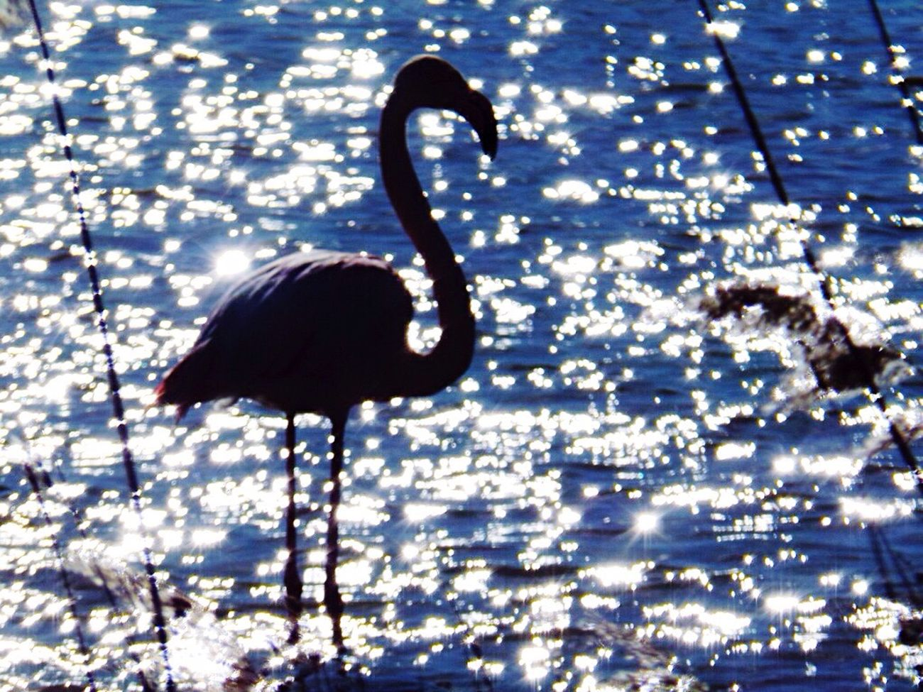 Showcase April Flamant Rose Camargue Taking Photos Enjoying Life Relaxing Schooltrip Hello World Loneliness Magic Likeforlike Sunset France