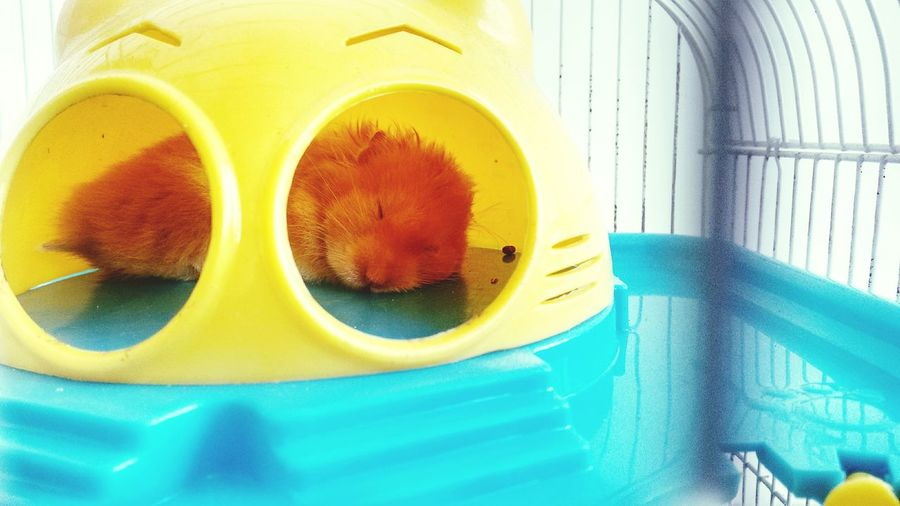My sleepy sandy....^_^ First Eyeem Photo