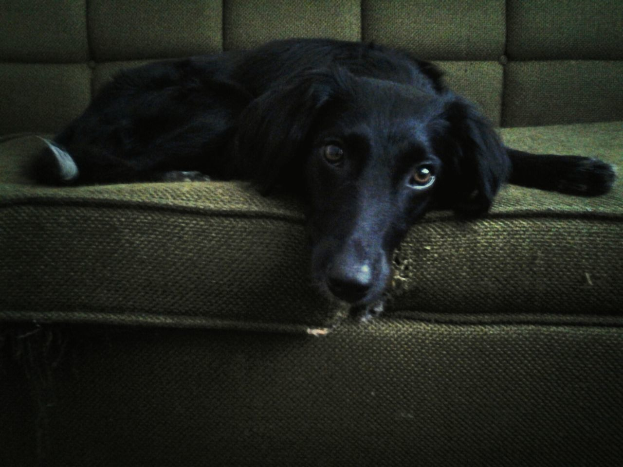 Beautiful stock photos of pets, Animal, Animal Themes, Close Up, Companion