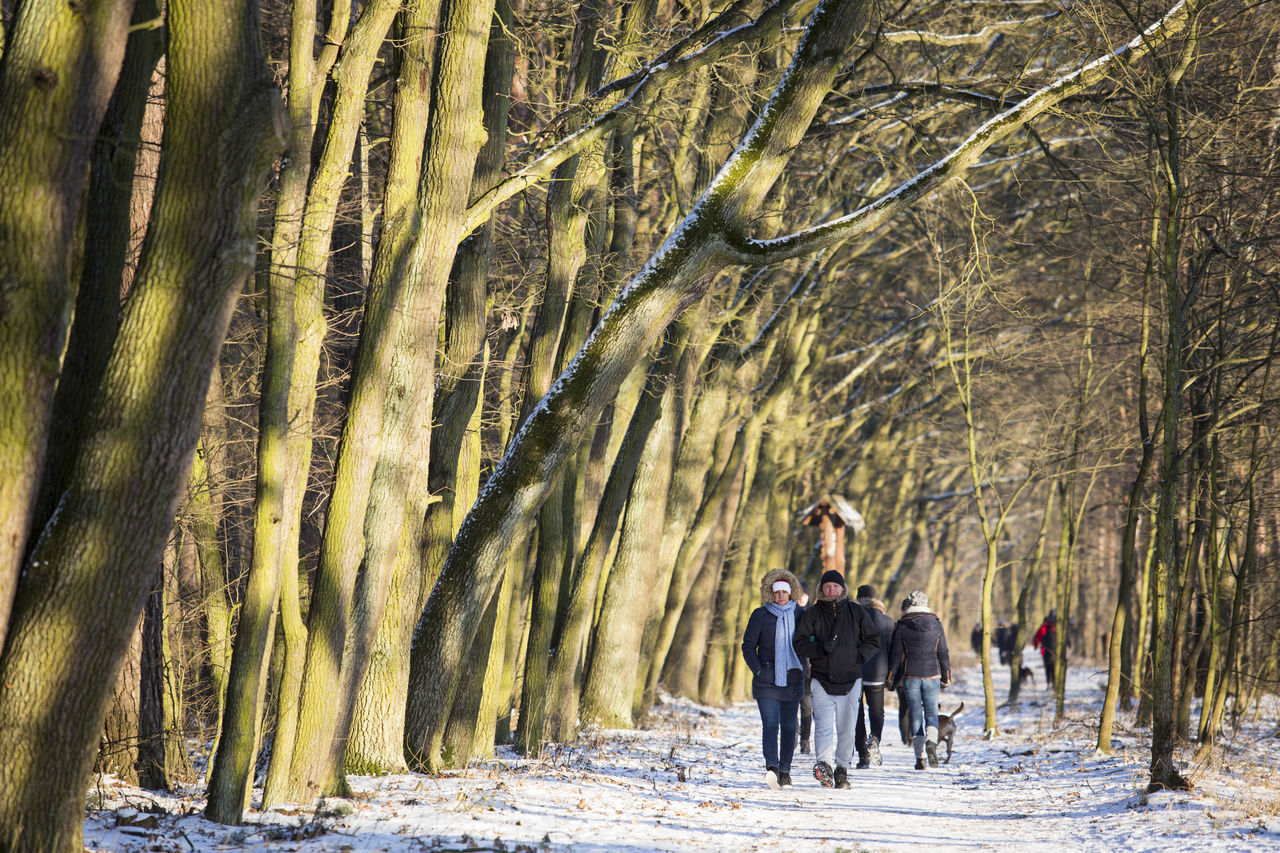 tree, full length, outdoors, tree trunk, walking, nature, cold temperature, women, togetherness, winter, forest, real people, lifestyles, day, branch, beauty in nature, adult, men, adults only, people, young adult