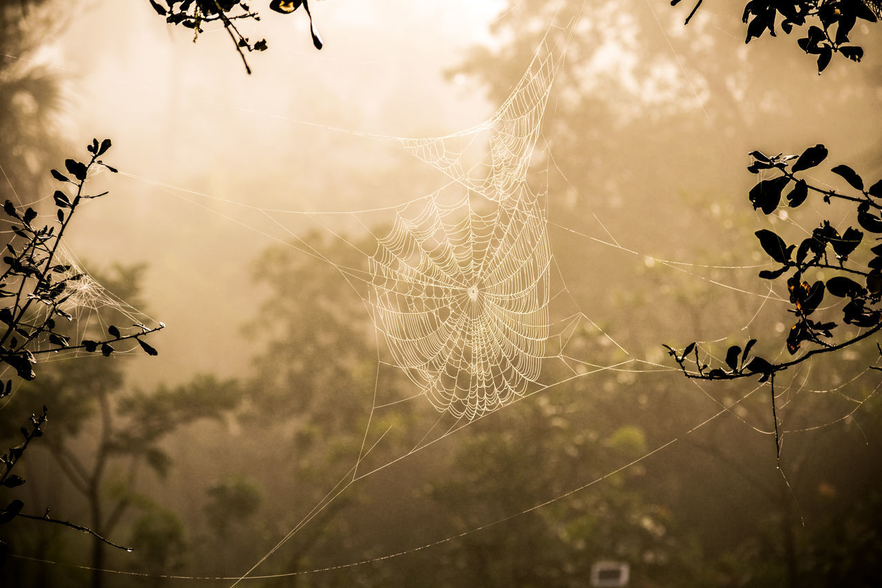 Amazing Amazing Nature Amazing_captures Beatiful Beauty In Nature Betterlandscapes Branches Day Depth Of Field Dew Fog Foggy Forest Forest Photography Jungle Nature Nature Photography Nature_collection No People Sunshine Tree Web Wild Wonderful